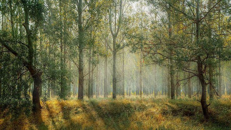 Dalla Gestione Sostenibile Delle Foreste Un Aiuto Consistente Contro La Poverta